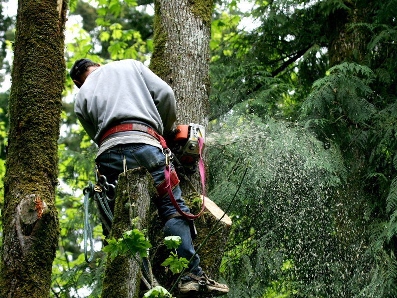 Tree Trimming Safety - Nelson Brothers Agency